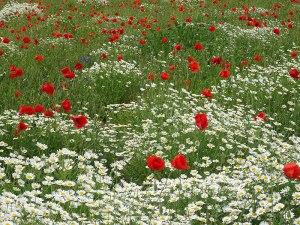 Wild flowers on the way to Würzburg