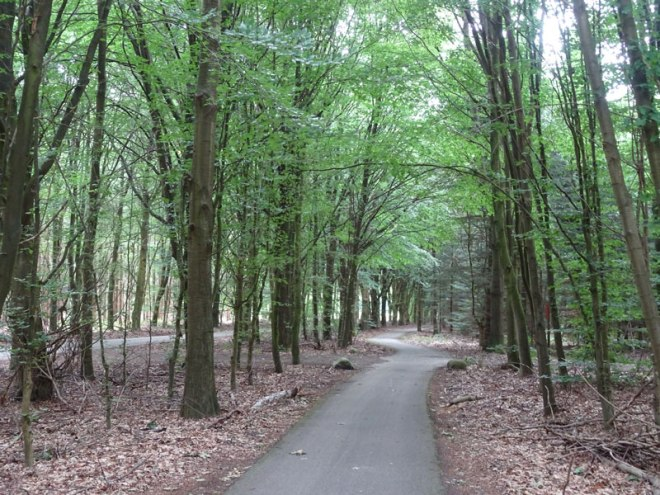 Drenthe-Nat-Park-Path---Compressed