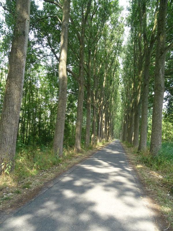 road-with-trees---compressed