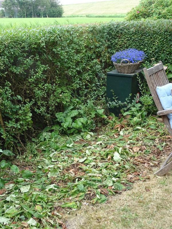 Wilted-Garden---Ternaard---Compressed