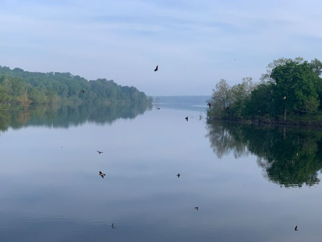 River-with-Birds